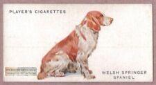 Welsh Springer Spaniel Dog Canine Pet Vintage Ad Trade Card