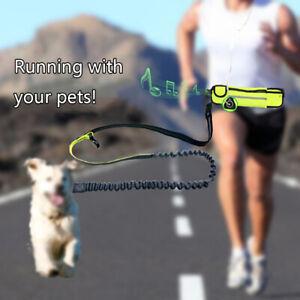 Elastic belt running dog leash lead sports jogging walking pet dog belt rope.zh