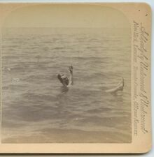 Floating in the DEAD SEA Man arms & legs up - STEREOVIEW circa 1885 pub Jarvis