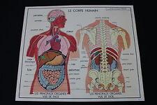 V226 Affiche scolaire papier Rossignol 1 Corps humain 2 Appareil digestif 90*75