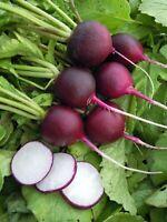 Seeds Radish Malaga Purple Vegetable Organic Heirloom Russian Ukraine