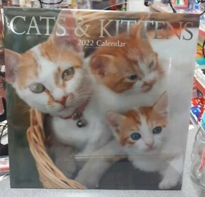Cats and Kittens 2022 Square Wall Calendar New Free Postage