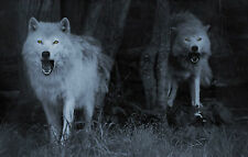 Framed Print - Terrifying Ghost Wolves (Picture Poster Gothic Animal Wolf Art)