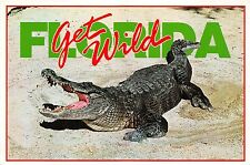 BG13890 florida gators albert wild aligator  usa