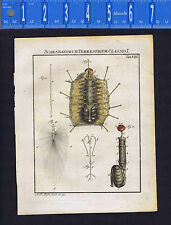 Dissection -Scaribaeorum Terrestrial -Roesel/Rosel Insecten 1749 Engraved Print