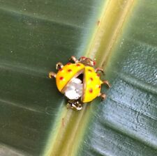 Vintage 60's Enamel Lady Bug Ladybug Scatter Pin Brooch Jewelry