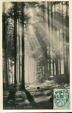 Carte Forêt des VOSGES au matin