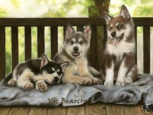 Siberian Husky, Limited Edition Pup Cameo Print