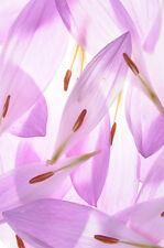 BEAUTIFUL FLOWER PETALS CANVAS PICTURE #15 STUNNING FLORAL HOME DECOR A1 CANVAS