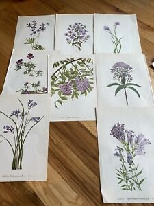 botanical prints vintage