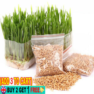 400PCS/Pack Cat Grass Seed for Cats Kitty Other Pets Natural Health Food