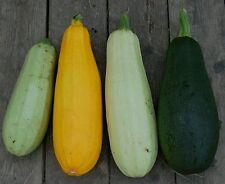☺25 graines.4 variétés  de courgettes récolte 2016 dans 4 sachets différents
