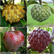 20 Pcs Mixed Sugar Apple Seeds,Bull Heart Sugar Apple, Delicious Sweet Fruits