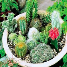 20 Cactus Seeds Indoor Multifarious Ornamental Plants. #6A