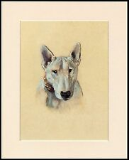 BULL TERRIER LOVELY LITTLE DOG PRINT GREAT HEAD STUDY MOUNTED READY TO FRAME