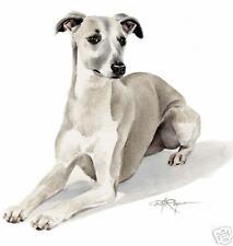 Whippet Dog Watercolor Art 11 X 14 Print signed Djr