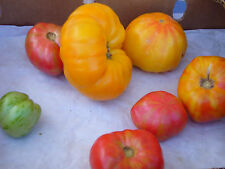 Tomate AMANA ORANGE 10 Samen Solanum Lycopersicum ursprüngliche Sorte