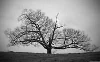 Tree Field - Black And White Countryside Wall Art Large Poster & Canvas Pictures