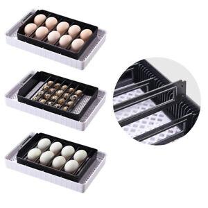 12-Egg Incubator Hatcher Machine Digital Automatic Turning Temperature Control