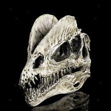 Dinosaur Dilophosaurus Skull Resin Model Collectibles Home Bar White