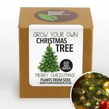 Plants From Seed - Grow Your Own Christmas Tree Plant Kit