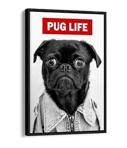 PUG LIFE -FLOAT EFFECT CANVAS WALL ART PIC PRINT GRAFFITI- BLACK & WHITE