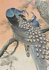 A3 Japanese Wall Art Print Two peacocks on tree branch (1900-30) by Ohara Koson