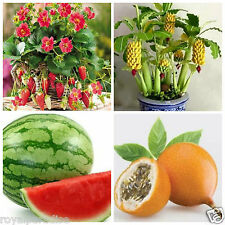 Bonsai Fruit Seeds Combo #7 - Strawberry Passionfruit Watermelon Banana Seeds