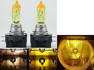 Halogen H11B 55W 3000K Yellow Two Bulbs Head Light Low Beam Replace Lamp Rally