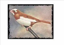 Placa de pared Vintage Bengalese Finch jaula pájaro imagen Sluis aviario signo