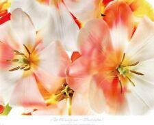 Tulips 1 Harold Davis Art Print 24x18