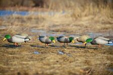 Greenhead Gear Full Body Mallard Feeder Pack Duck Decoys Avery Flocked Head Drk