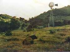 Larry Dyke Texas Landscape Hill Country Trees Windmill Pasture Signed Ltd Ed