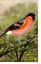 Pretty Bird in Tree Branch-Artist Signed Fred Sauter-Vintage Artwork Postcard