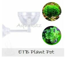 Plant Pot Cultivation Nature Aquarium Aquascape Aquatic Moss