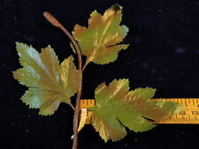 """Vintage Millinery Flower Shaded Green Leaf 3/""""  12 stems in a Branch Y301"""
