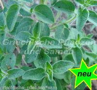 wilder Oregano * 200 Samen * robust und frostfest Kräuter * mehrjährig * oregan