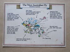 The West Australian Fly, Humour, Australia, Postcard 1987