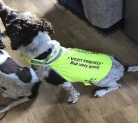 DOG HIGH VIS SAFETY VEST CUSTOM PRINTED  ANY PHOTO PET HI-VIS PERSONALISED COAT