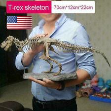 Large T Rex Tyrannosaurus Dinosaur 4d Assembled Skeleton Fossil Model Decoration