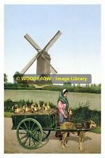rp13807 - Belgian Dog Milk Cart - photo 6x4