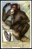 Chimpanzee Scimpanze Monkey Ape Primate 60+ Y/O Trade Ad Card