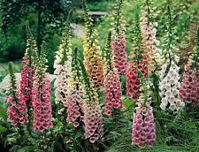 Spring Plants, Seeds & Bulbs