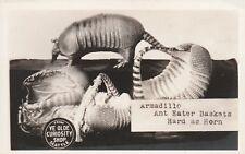 Washington - Seattle - Armadillo Ant Eater Baskets - Photo Postcard