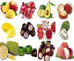 The Fruit Tree Shop