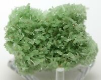 "1.4"" TOP FINE GYPSUM VAR. GREEN SELENITE FROM MT. GUNSON, AUSTRALIA (6145)"