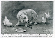 CLUMBER SPANIEL LABRADOR DOG ANTIQUE PRINT  Dash & Seraglio by Florence Jay 1929