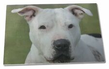 American Staffordshire Bull Terrier Dog Extra Large Toughened Glass, AD-SBT5GCBL