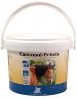 Kümmelsamen bei Pferden mit Blähungen Kolik Kräuter gegen Krampf Verdauung