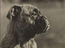 BULLDOG HEAD LARGE SIZE OLD DOG PHOTOGRAPH